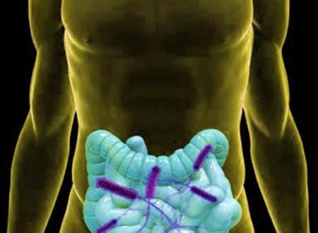 Flora batterica, obesità e diabete