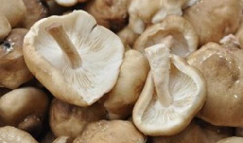 Fungo Shii - take Lentinula edodes