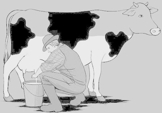 tirando-leite-de-vaca