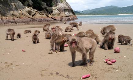 La centesima scimmia