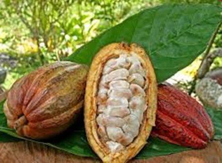 Gli alimenti con polifenoli, antiossidanti per la nostra salute.